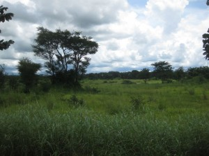 Das Hinterland von Kibo in der Regenzeit. Nur Trampelpfade führen durch das Dickicht.